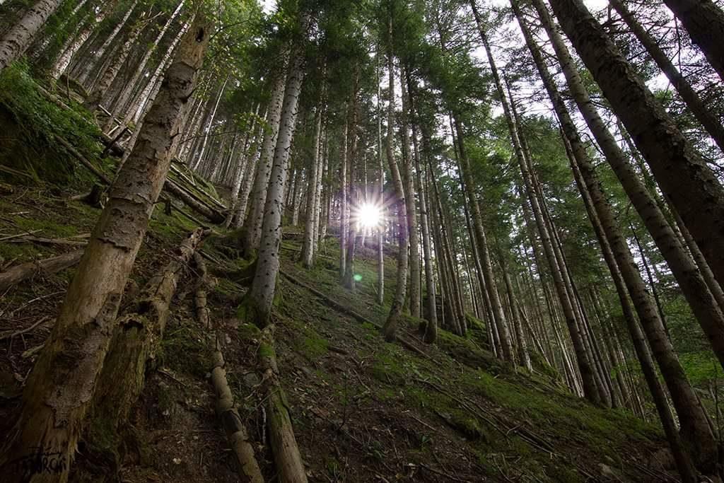 Les forêts de Wonderland