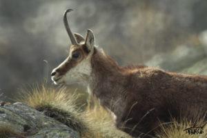 Photo animalière © Jérémy Taburchi